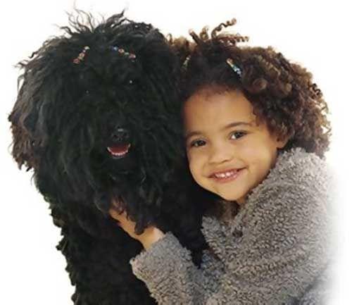 знакомство с собакой как себя вести
