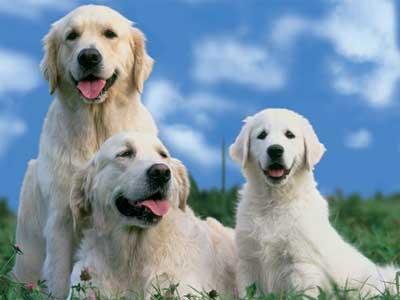 Препараты для собак