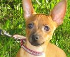 Воспитание щенка лайки: какие витамины для щенков, купить щенка в минске...