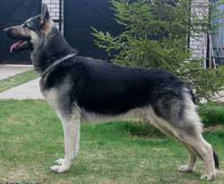 http://www.dogster.ru/upl/breed/0/163_399x399.jpg
