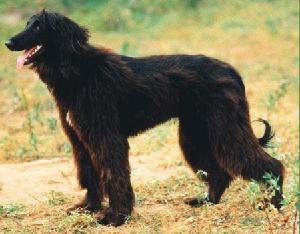 http://www.dogster.ru/upl/breed/1/1058_399x399.jpg