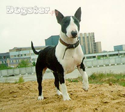 Породы собак, лишай у собак фото и фото.