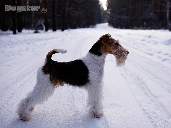 http://www.dogster.ru/upl/mydog_image/108/108915_750x650.jpg