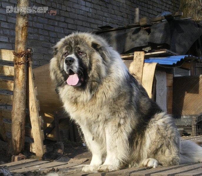 """,""www.dogster.ru"