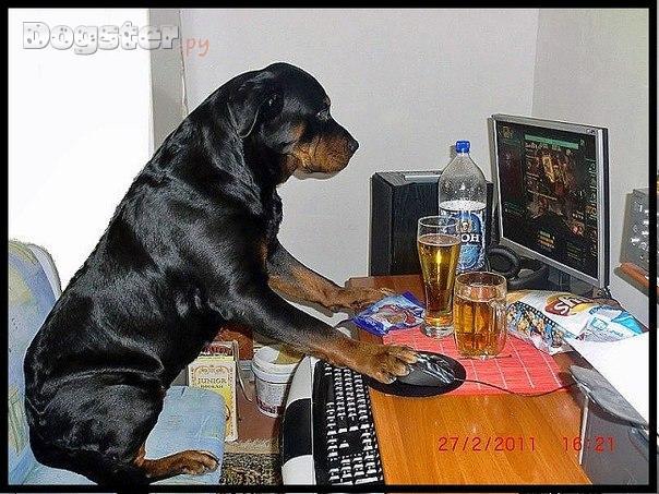 Породы собак фото