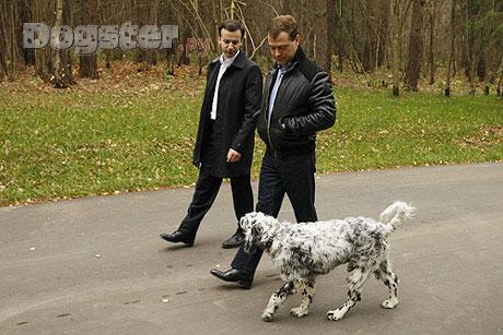 Русские звезды и их собаки сплетник