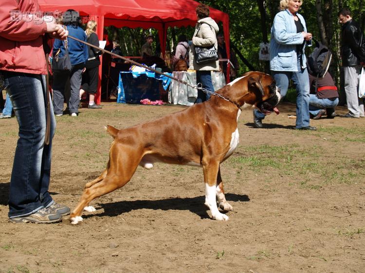 Питомник собак фото 1