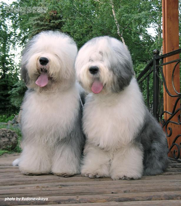 http://www.dogster.ru/upl/user_image/10/10948_800x700.jpg